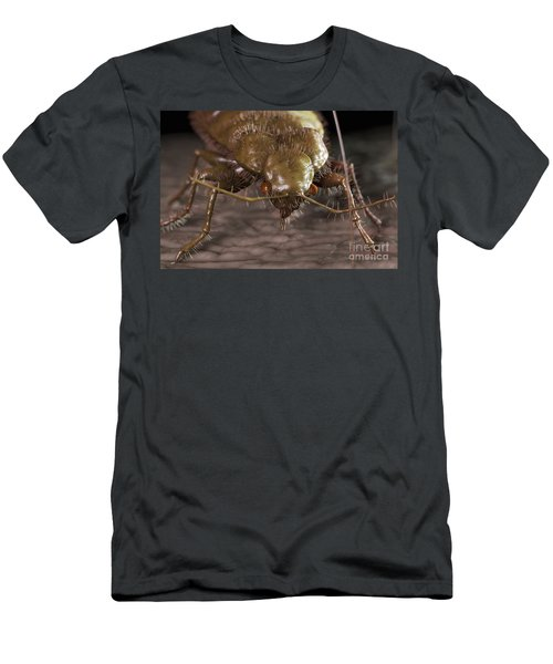 Bedbug Cimex Lectularius Men's T-Shirt (Athletic Fit)