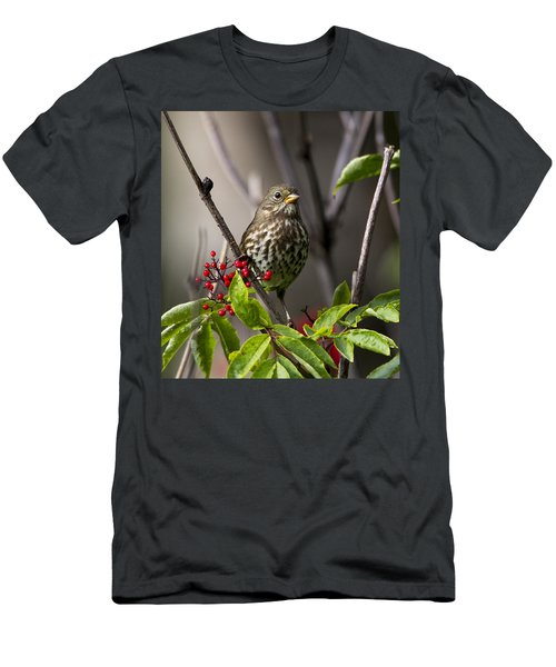 Fox Sparrow Men's T-Shirt (Athletic Fit)