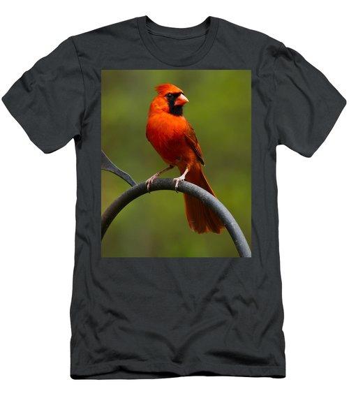 Male Cardinal Men's T-Shirt (Athletic Fit)
