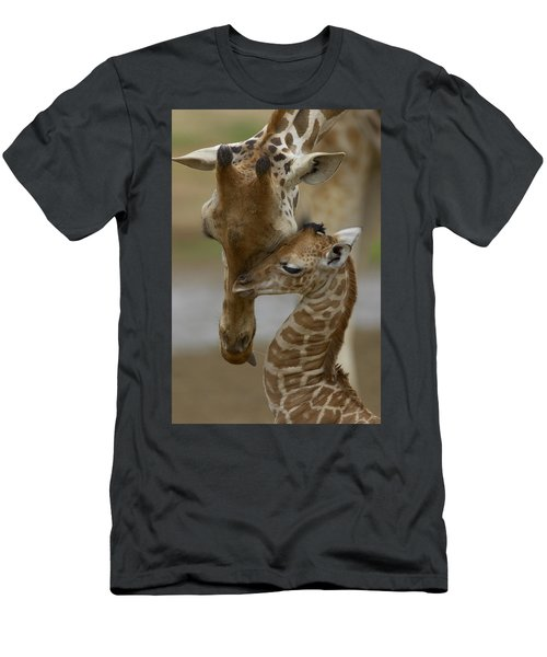 Rothschild Giraffe And Calf Men's T-Shirt (Athletic Fit)