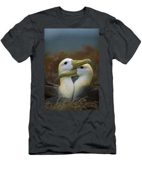 Waved Albatross Pair Bonding Galapagos Men's T-Shirt (Slim Fit) by Tui De Roy
