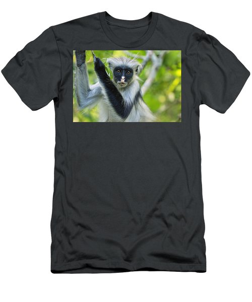 Zanzibar Red Colobus In Tree Jozani Men's T-Shirt (Athletic Fit)