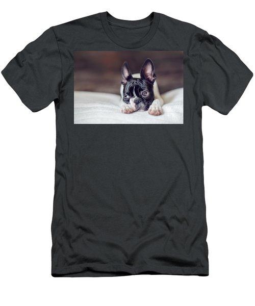 Boston Terrier Puppy Men's T-Shirt (Athletic Fit)