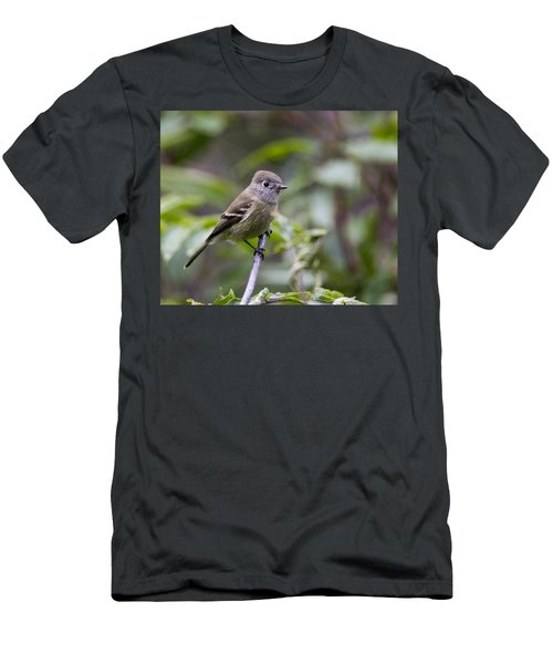 Alder Flycatcher Men's T-Shirt (Athletic Fit)