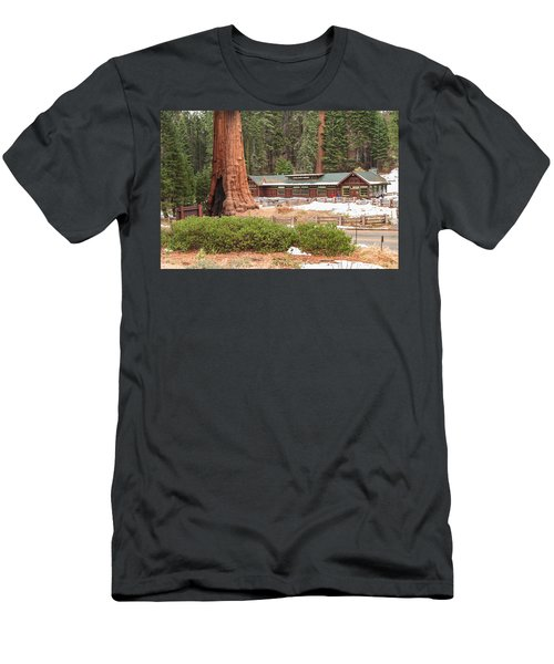 A Giant Among Trees Men's T-Shirt (Athletic Fit)