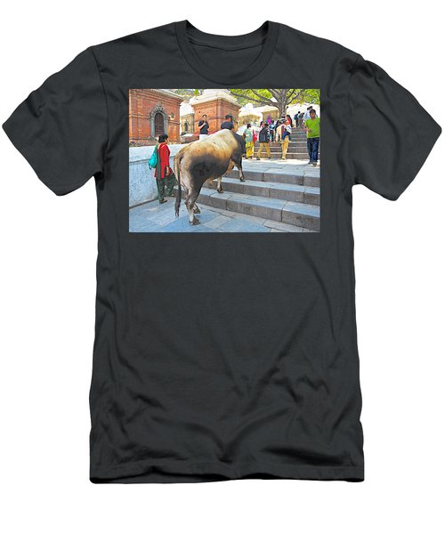 A Holy Cow Climbing Steps From Bagmati River In Kathmandu-nepal  Men's T-Shirt (Athletic Fit)