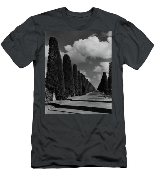 A Street Lined With Cypress Trees Men's T-Shirt (Athletic Fit)