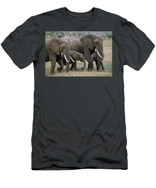 African Elephant Females And Calves Men's T-Shirt (Athletic Fit)