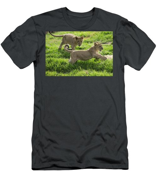 African Lion Cubs Playing Men's T-Shirt (Athletic Fit)