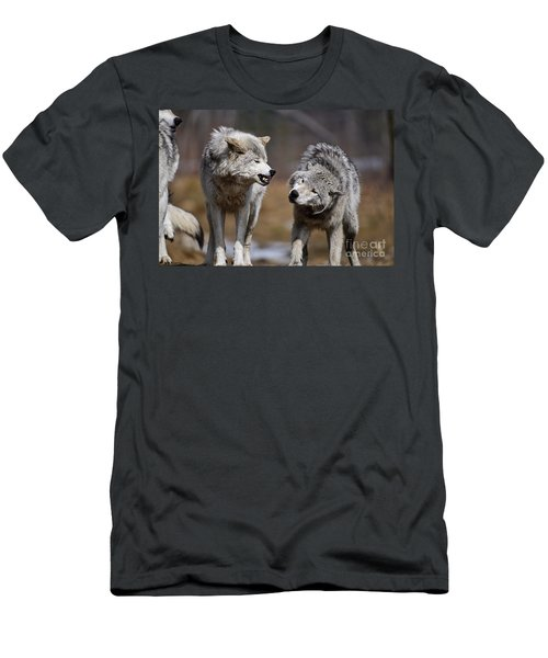 Men's T-Shirt (Slim Fit) featuring the photograph Alpha Displeasure by Wolves Only