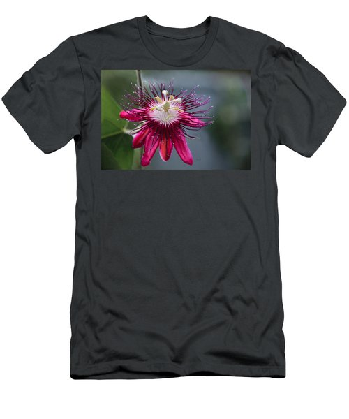 Amazing Passion Flower Men's T-Shirt (Athletic Fit)