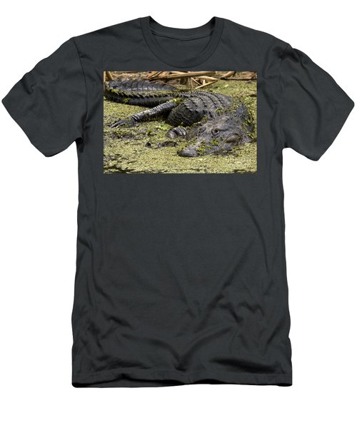 American Alligator Smile Men's T-Shirt (Athletic Fit)