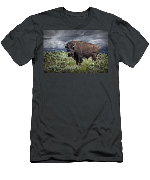 American Buffalo Or Bison In Yellowstone Men's T-Shirt (Athletic Fit)