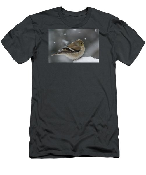 American Goldfinch In Winter Men's T-Shirt (Athletic Fit)