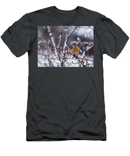 American Robin Men's T-Shirt (Slim Fit)