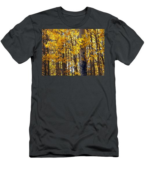 Among The Aspen Trees In Fall Men's T-Shirt (Athletic Fit)