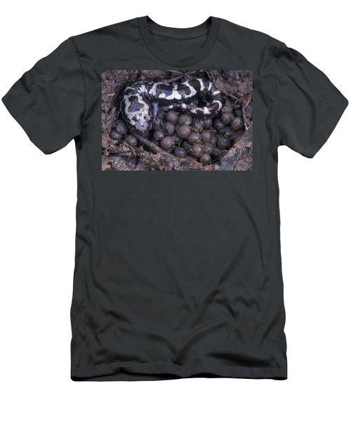 An Endangered Marbled Salamander Nests Men's T-Shirt (Athletic Fit)