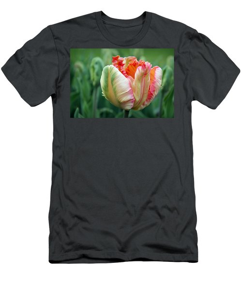 Apricot Parrot Tulip Men's T-Shirt (Athletic Fit)