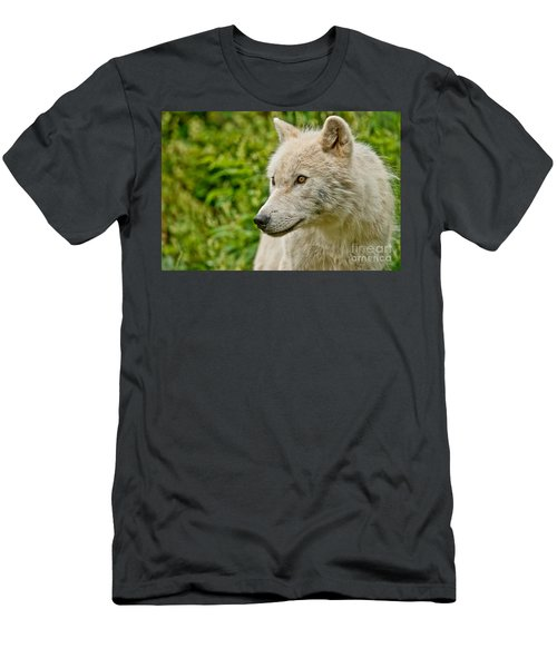 Arctic Wolf Pictures 241 Men's T-Shirt (Athletic Fit)