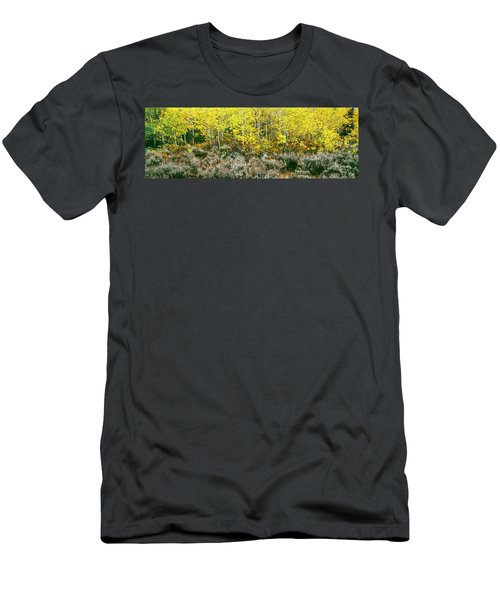 Aspen Trees And Sagebrush In A Grove Men's T-Shirt (Athletic Fit)