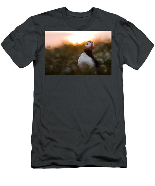 Atlantic Puffin At Sunrise Skomer Men's T-Shirt (Slim Fit) by Sebastian Kennerknecht