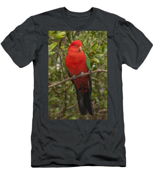 Australian King Parrot Male Dandenong Men's T-Shirt (Athletic Fit)