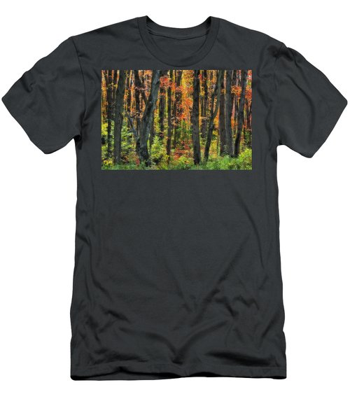 Autumn Sugar Maple, Yellow Birch And Men's T-Shirt (Athletic Fit)