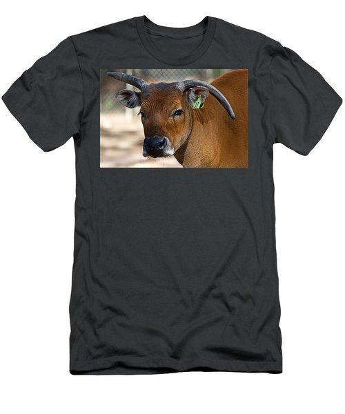 Banteng Girl Men's T-Shirt (Athletic Fit)