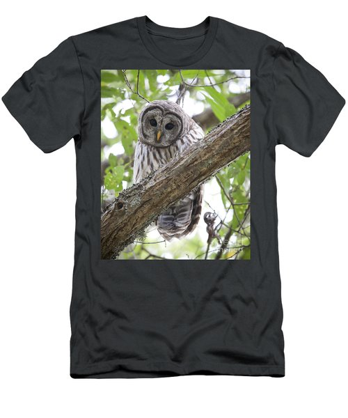 Barred Owl Men's T-Shirt (Slim Fit) by Chris Dutton