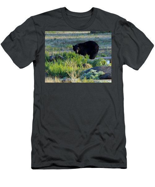 Bear 3 Men's T-Shirt (Athletic Fit)