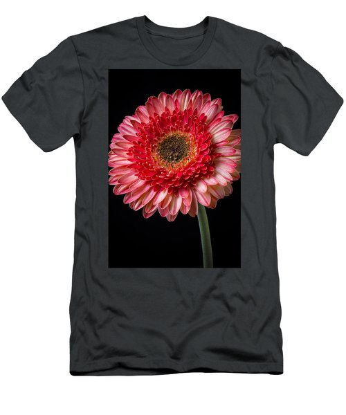Beautiful  Pink Gerbera Men's T-Shirt (Athletic Fit)