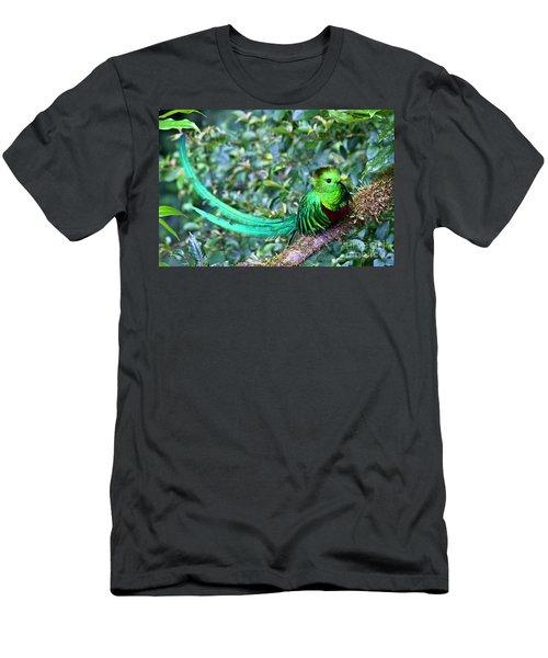 Beautiful Quetzal 3 Men's T-Shirt (Slim Fit) by Heiko Koehrer-Wagner