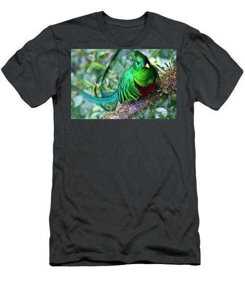 Beautiful Quetzal 4 Men's T-Shirt (Slim Fit) by Heiko Koehrer-Wagner