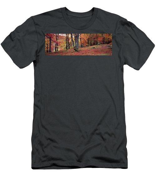 Beech Trees In Autumn, Aberfeldy, Perth Men's T-Shirt (Athletic Fit)