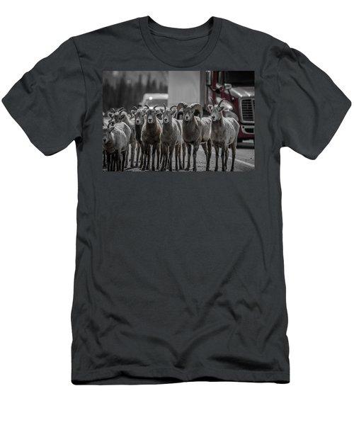 Big Horn Sheep Road Block Men's T-Shirt (Athletic Fit)
