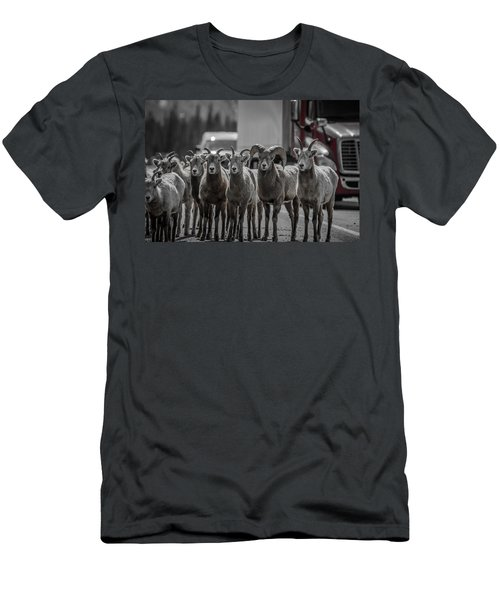 Big Horn Sheep Road Block Men's T-Shirt (Athletic Fit)