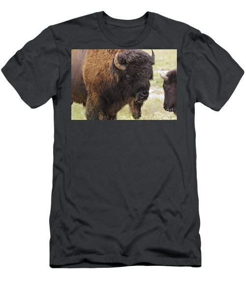 Men's T-Shirt (Slim Fit) featuring the photograph Bison From Yellowstone by Belinda Greb