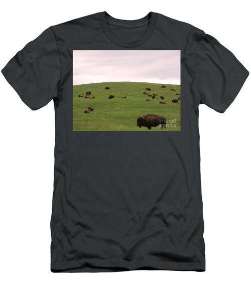 Bison Herd Men's T-Shirt (Athletic Fit)