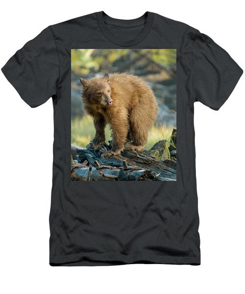 Black Bear Men's T-Shirt (Athletic Fit)