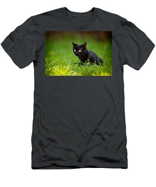 Black Kitten Men's T-Shirt (Athletic Fit)