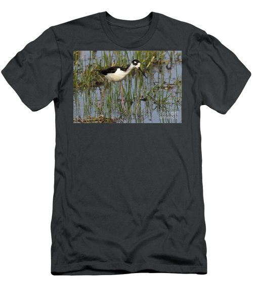 Black-necked Stilt Men's T-Shirt (Athletic Fit)