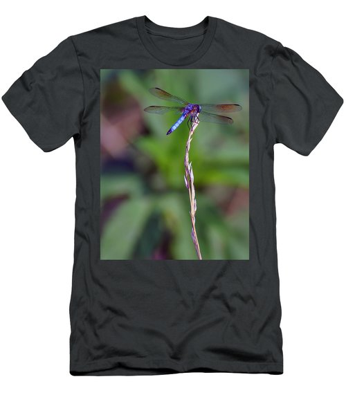 Blue Dragonfly On A Blade Of Grass  Men's T-Shirt (Athletic Fit)