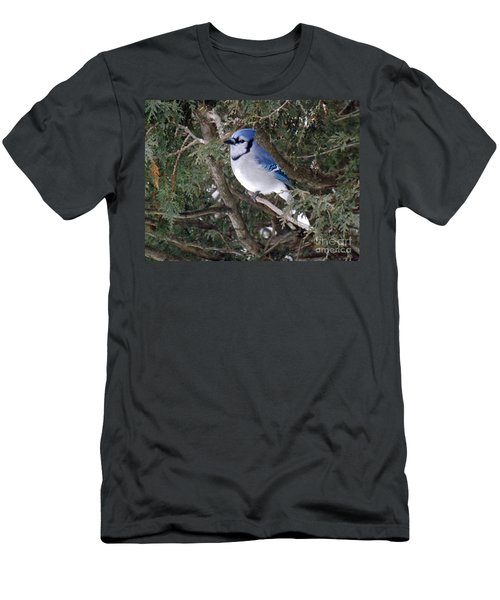 Men's T-Shirt (Slim Fit) featuring the photograph Blue Jay In The Cedars by Brenda Brown