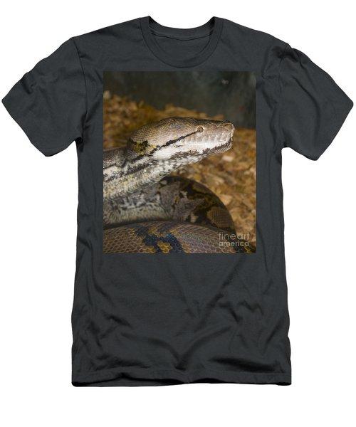 Boa Constrictor - Mogo Zoo - Australia Men's T-Shirt (Athletic Fit)