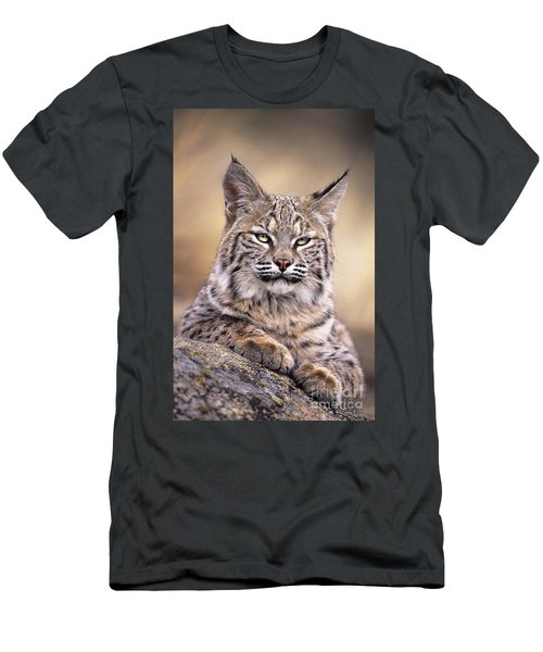 Bobcat Cub Portrait Montana Wildlife Men's T-Shirt (Athletic Fit)