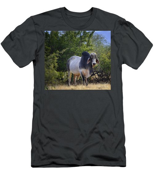 Brahma Cow Men's T-Shirt (Athletic Fit)