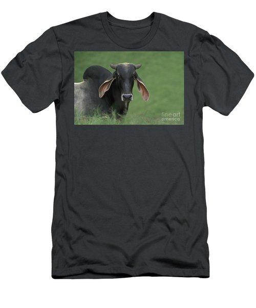 Bramha Bull Men's T-Shirt (Athletic Fit)