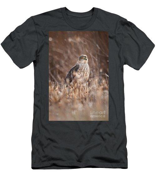 Broad-winged Hawk Men's T-Shirt (Athletic Fit)