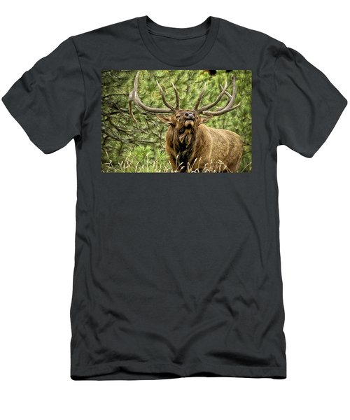 Bugling Bull Elk II Men's T-Shirt (Athletic Fit)