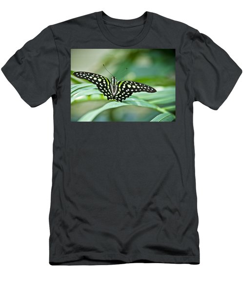Butterfly Resting Color Men's T-Shirt (Athletic Fit)